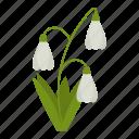 flowers, garden, gardening, leaf, plant, snowdrops, wildflowers