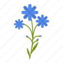 chicory, flower, garden, gardening, leaf, plants, wildflowers icon