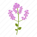 flowers, garden, gardening, leaf, plant, stachys, wildflowers icon