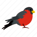 bird, feather, jungle, plumage, tail, tropical, wildlife icon