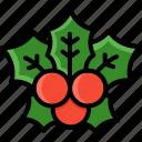 christmas, mistletoe, plant, santalales, winter