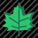 leaf, plant, winter, leaves