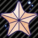 starfish, ocean, animal, sea, nature