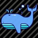 whale, ocean, animal, sea, mammal, nature
