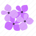 floral, hydrangea, nature, ornament icon
