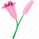 bud, floral, lily, nature, ornament icon