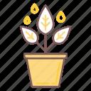 development, plant, leaf, business, pot, tree, growth