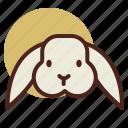 animal, farm, pet, rabbit, ranch