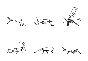 Insect 2 Outline