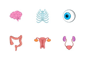 Internal organs icon set