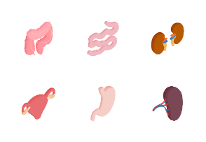Internal organs - isometric