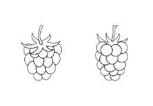 Berries - Outline