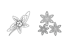 Spice - Outline